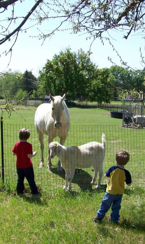 Children Farming Goats Horses Electric Fence Grass