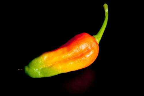 Chili Orange Green Sharp Spice Sharpness