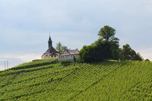 Church Mountain Vineyard