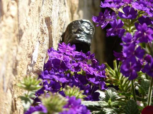 Close Up Blossom Bloom Flower Violet Purple