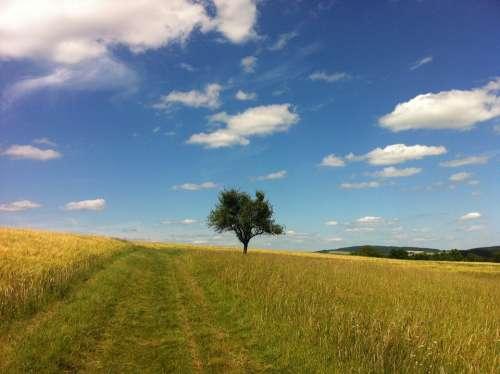 Clouds Summer Tree Trail Field Middle Rhine Rhine