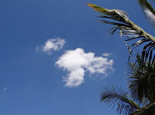 Clouds Cumulus Palm Tree Palm Leaves Dharwad India