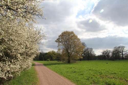 Clouds Road Field Sun