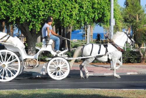 Coach Horse Coachman Drive Locomotion