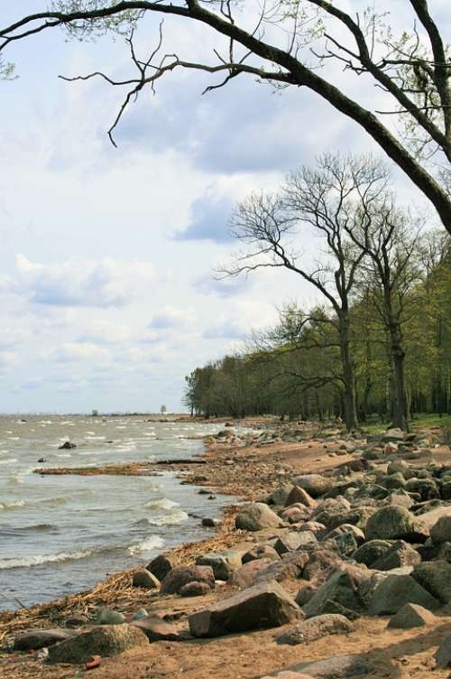 Coast Shore Beach Sea Rocks Sand Trees Peterhof