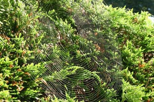 Cobweb Web Nature Autumn Hedge Bush