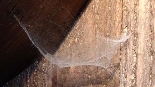 Cobweb Web Network Spider Nature Wood