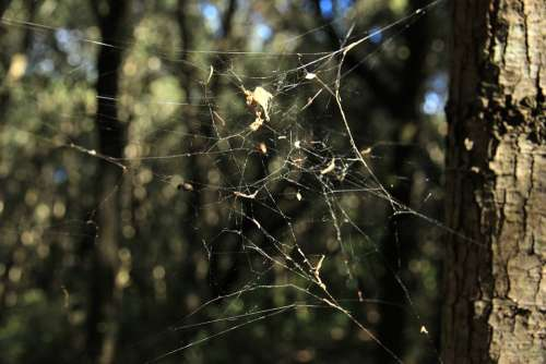 Cobweb Autumn Forest Spider