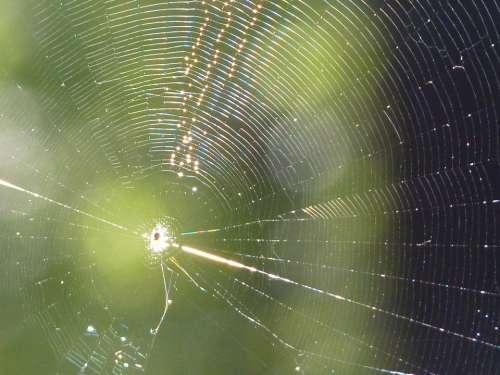 Cobweb Web Spider Sun Close Up Nature Insect