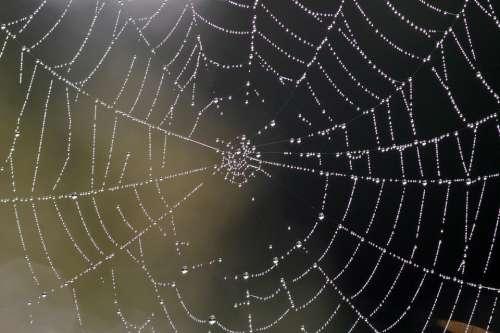 Cobweb Nature Web Dew Dewdrop Autumn Insect