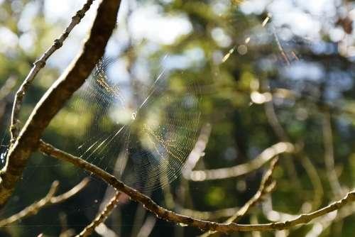 Cobweb Autumn Spider Backlighting Animals Arachnid