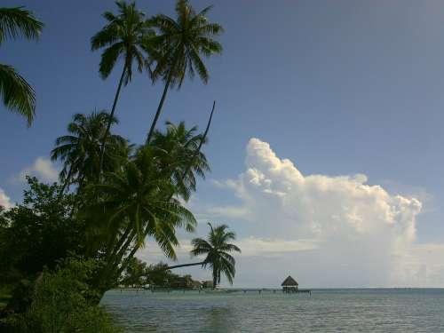 Coconut Lagoon Polynesia