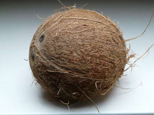 Coconut Coconuts Exotic Sweet Palm Mediterranean
