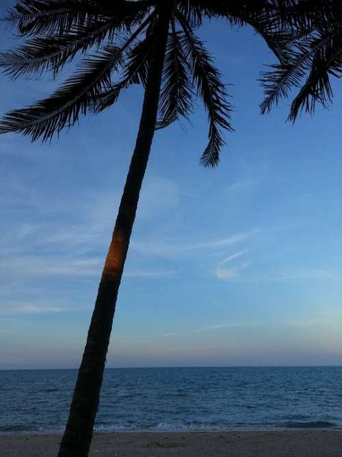 Coconut Tree Beach Tree Sea Nature Tropical