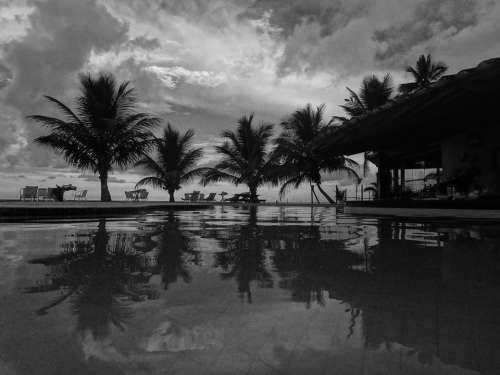 Coconut Tree Holiday Vocation Resort Coconuts