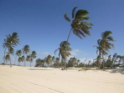 Coconut Trees Wind Sand Beach Blue Sky
