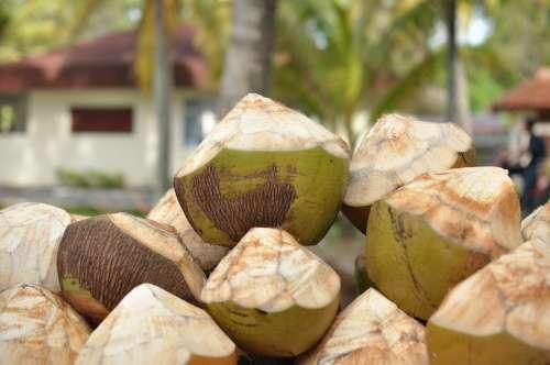 Coconuts Resort Drinks