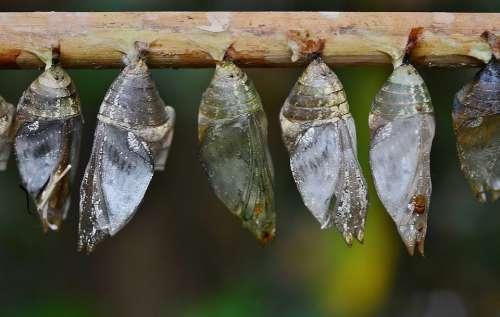 Cocoons Larva Larvae Insect Larvae Macro Nature