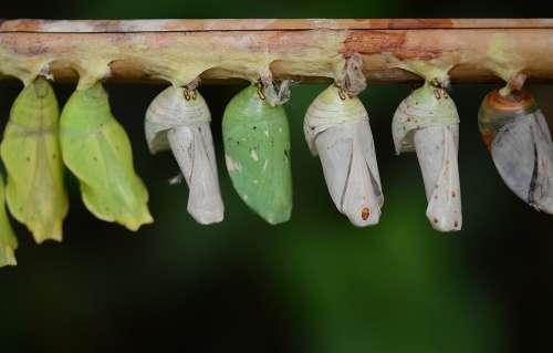 Cocoons Green Larva Larvae Insect Larvae Macro