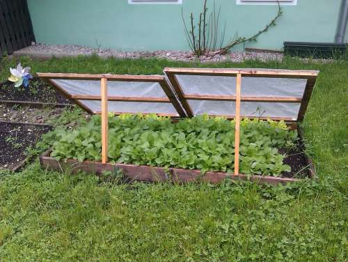 Cold Frame Spring In The Garden Garden Bed Of Salad