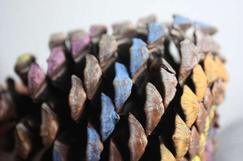 Cone Decoration Nature Wood Colorful Texture