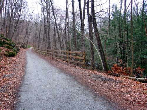 Connecticut Landscape Forest Trees Road Trail