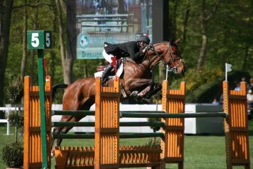 Contest Horses Obstacle Horseback Riding