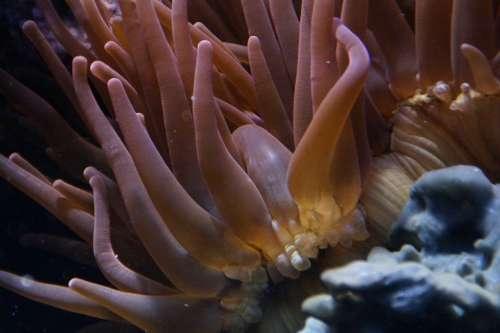 Coral Mollusk Underwater Ocean Sea Meeresbewohner
