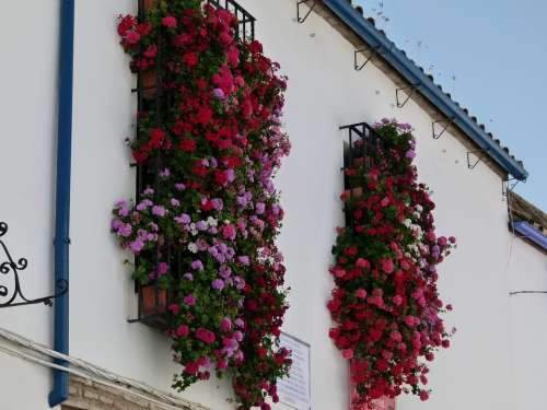 Cordoba Spain House Building Flowers Windows