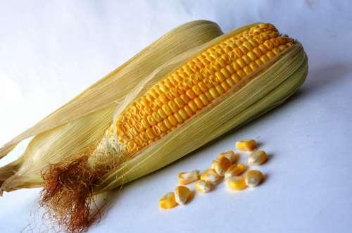 Corn Maize Vegetables Grain Organic Harvest