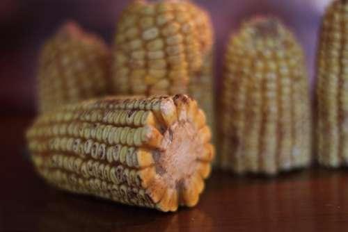 Corn Fall Autumn Seasonal Thanksgiving Nature