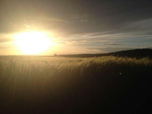Cornfield Cereals Sun Sunset Field Evening Clouds