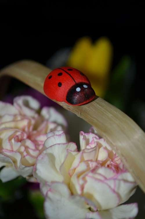 Corsage Basket Ladybug Clove