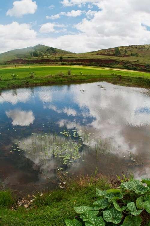 Countryside Rice Field Fish Pond Fisheye Water