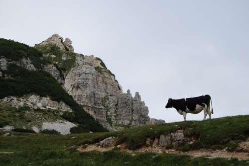 Cow Mountain Rock