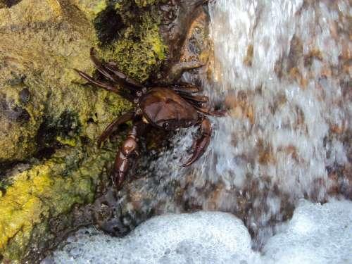 Crab Shellfish Crustacean Waterfall Nature Wild