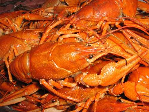 Crabs Fish Lobster Beer Food Dinner