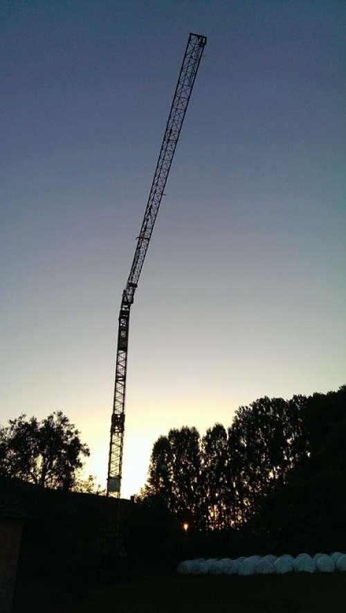 Crane Night Twilight