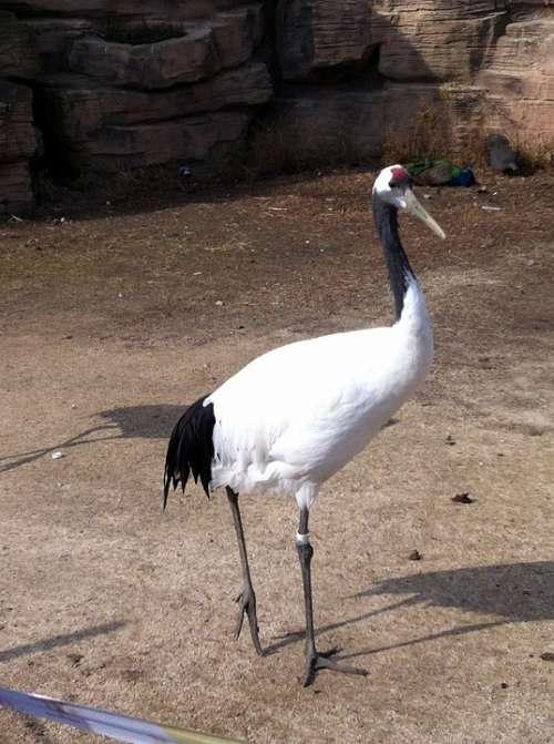 Crane Bird Water Birds Feather Sandhill Cranes