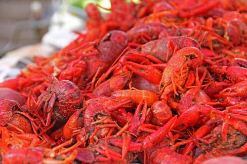 Crawfish Mud Bugs South Louisiana New Orleans Food