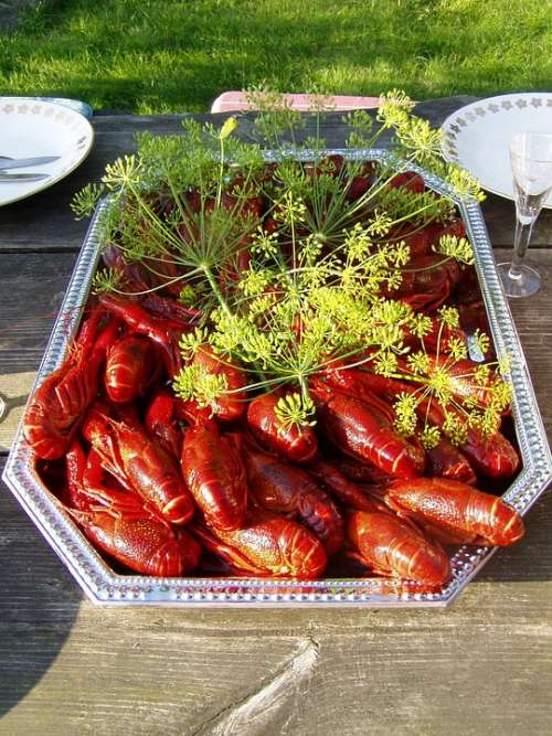 Crayfish Kalas Dill August Sweden