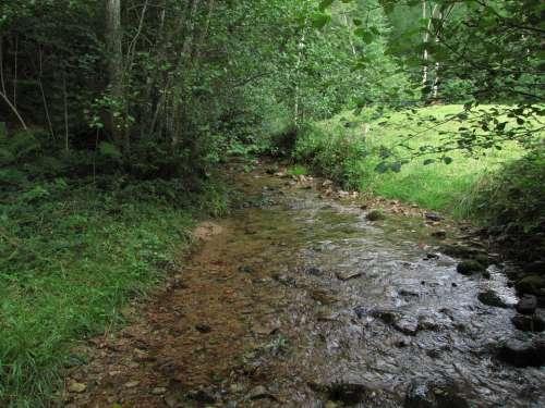 Creek Nature Field