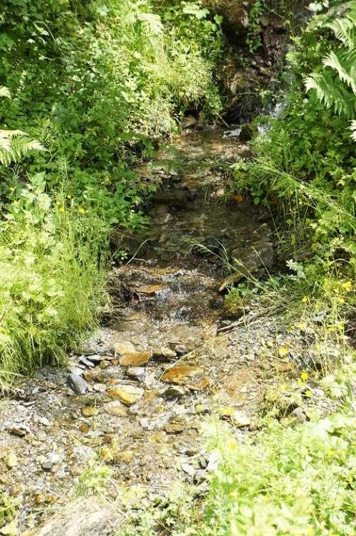 Creek Nature Bach Water Landscape Idyll Flow