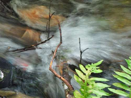 Creek Water Flowing Stream Nature Blur