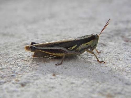 Cricket Insect Antennas Legs