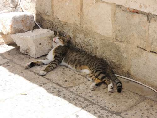 Croatia Dubrovnik City Cat Sleep Are Rest Beast