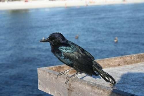Crow Bird Beach