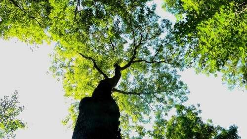 Crown Tree Nature Sun Silhouettes Sunlight Light