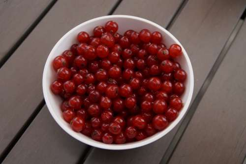 Currants Berries Bowl Fruit Red Red Currant