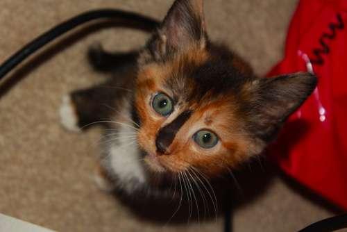 Cute Kitty Kitten Cat Pet Animal Beautiful